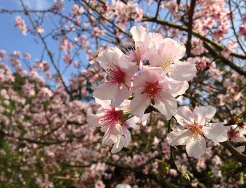 Mantenimiento de jardines en primavera en comunidades de vecinos