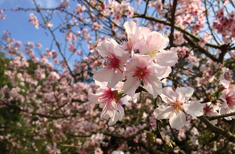 Mantenimiento de jardines en primavera