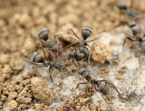 Plagas de hormigas: ¿Cómo detectarlas?