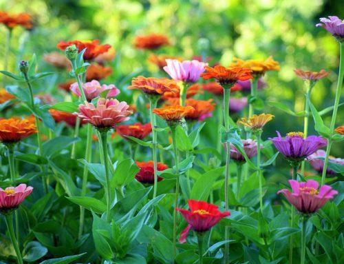 Cuidados del césped en verano. Consejos de jardinería