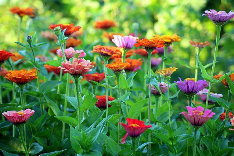 jardín verano